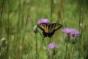 Butterfly-on-Weeds-and-Wildflowers-3-1024x685