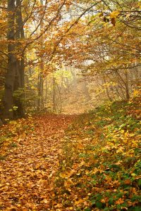 Fall-Equinox-Celebration